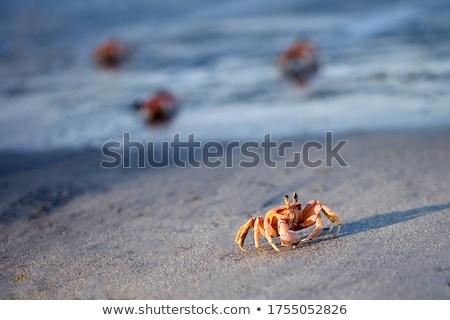 Szellem rák homok közelkép lövés fehér Stock fotó © macropixel