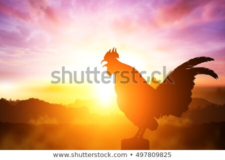 Sunrise with a rooster Stock photo © Lightsource