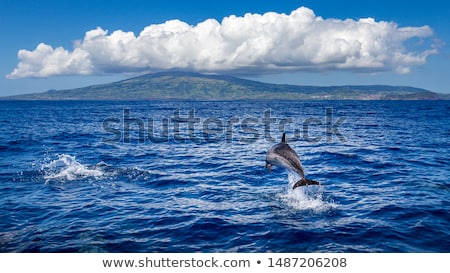 eiland · hemel · natuur · veld · groene - stockfoto © dinozzaver