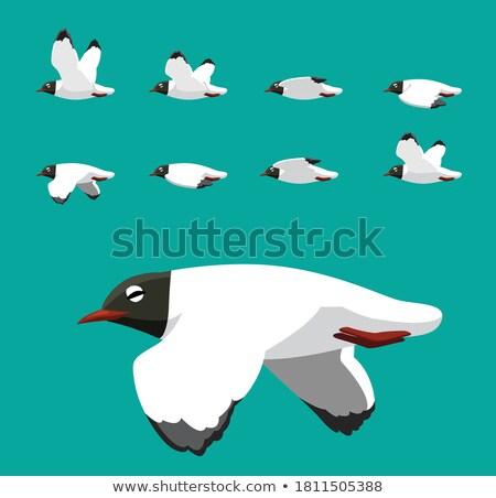 Black-headed Gull Stock photo © ivonnewierink