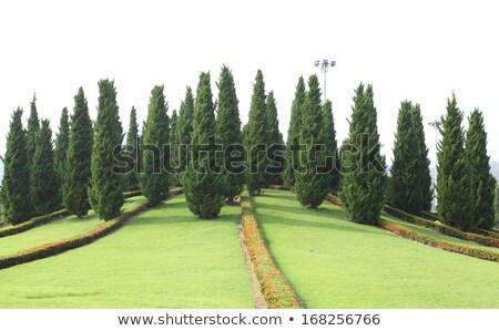 landscaped garden royal flora ratchaphruek stock photo © ruslanomega