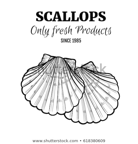 sea shell isolated on old paper Stock photo © oly5