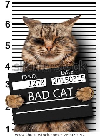 Gefangener · schlecht · weiß · Gesicht · Recht · Polizei - stock foto © elnur