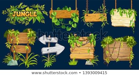 Dzsungel felirat óriásplakát bambusz szalag trópusi Stock fotó © Lightsource