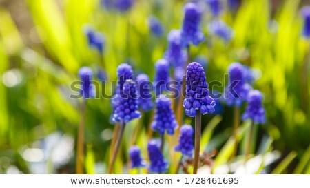 primer · plano · flores · flor · textura · verano · verde - foto stock © hraska