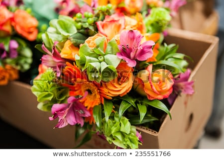 fiori · scatola · regalo · isolato · bianco · bellezza · Daisy - foto d'archivio © karandaev