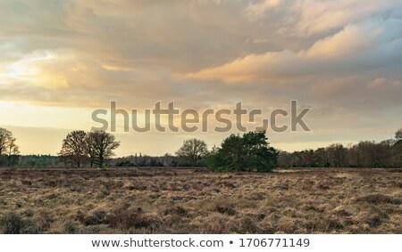 Vidéki táj naplemente ősz távoli házak hegyek Stock fotó © photosebia