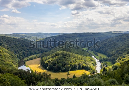 Old-growth forest with a streaming creek Stock photo © olandsfokus