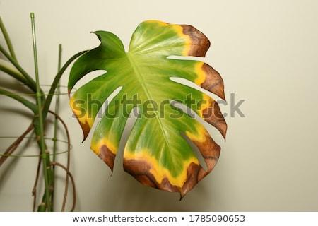 withered plant Stock photo © OleksandrO