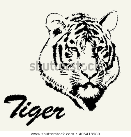 Stock photo: vector stylized face of angry tiger