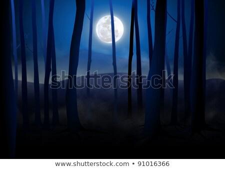 natureza · cena · lua · estrelas · ilustração · floresta - foto stock © bluering
