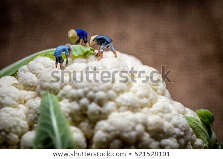 Asian farmers working in cauliflower field. Macro photo Stock photo © Kirill_M