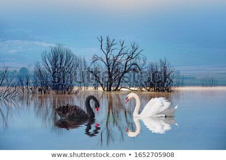 Blanco estanque agua casa edificio ciudad Foto stock © artjazz