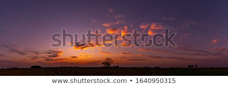 Vivid sunset clouds and trees Stock photo © Juhku