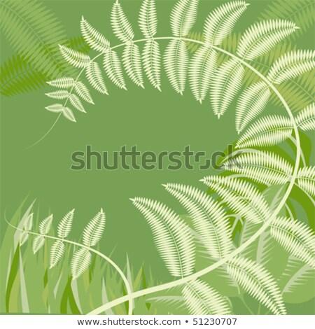 piękna · artystyczny · paproci · liści · projektu · tle - zdjęcia stock © julietphotography