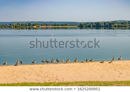 Altmuehlsee in Bavaria Stock photo © rbiedermann