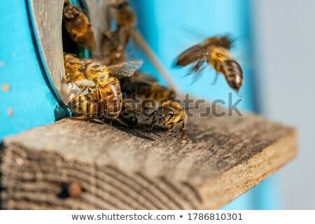 グループ 飛行 ヴィンテージ 蜂の巣 動物 蜂 ストックフォト © Fesus