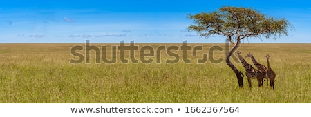 field of wild grasses Stock photo © IS2