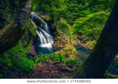 çağlayan iki büyük ağaçlar örnek ağaç Stok fotoğraf © bluering