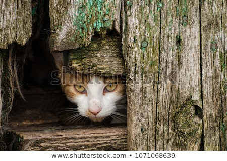 Feral Cat Stock photo © dirkr