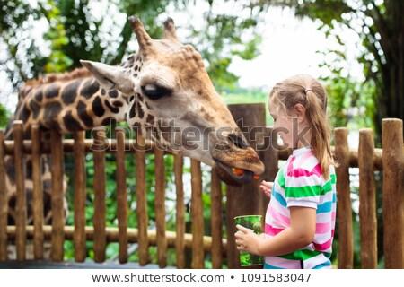 Safari kız hayvanat bahçesi hayvanları örnek çim doğa Stok fotoğraf © bluering
