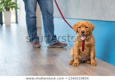 sahipleri · oturma · resepsiyon · kız · köpek · erkek - stok fotoğraf © monkey_business