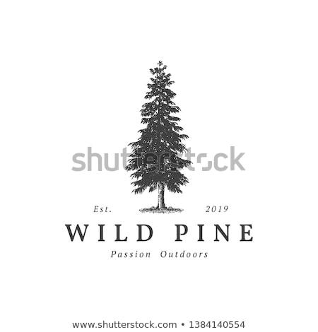 Stock photo: Pine tree forest illustration