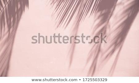 熱帯 · 手のひら · 青 · ぼやけた · 夏 - ストックフォト © Illia