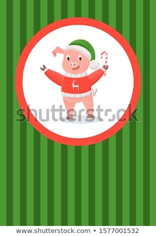 Disznó piros pulóver rénszarvas zöld kalap Stock fotó © robuart
