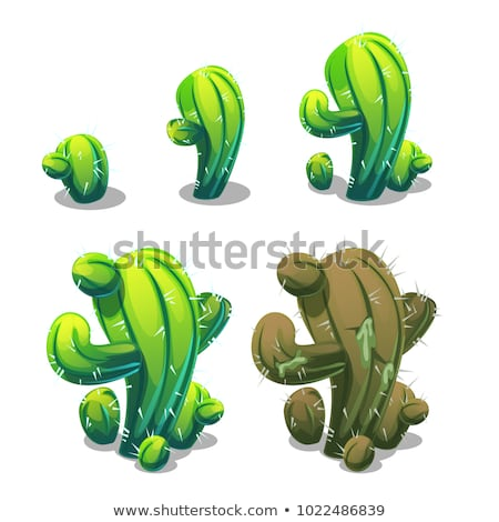 Life stages of mexican cactus isolated on white background. Vector cartoon close-up illustration. stock photo © Lady-Luck