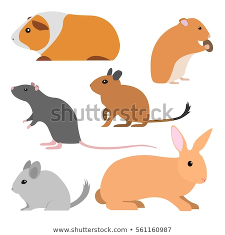 Cute gray chinchilla icon, fluffy pet, domestic animal, rodent, vector illustration Stock photo © MarySan
