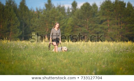 Woman Walking Dog on Sunny Day in Park Greenery Stock photo © robuart
