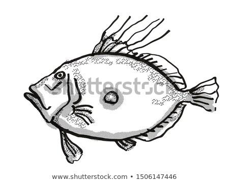 王 ニュージーランド 魚 漫画 レトロな 図面 ストックフォト © patrimonio
