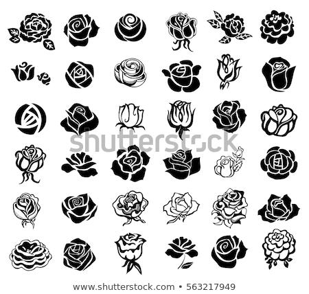 Gül çiçek ikon doğa imzalamak Stok fotoğraf © bspsupanut