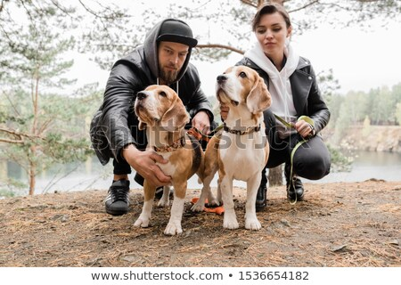 Young casual couple sitting on squats cuddling two purebred beagle puppies Stock photo © pressmaster