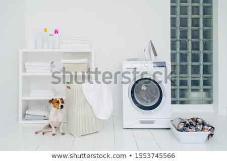 Jack russell terrier łazienka maszyny koszyka pranie półka Zdjęcia stock © vkstudio