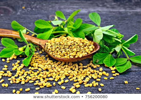 Fenugreek seeds with green leaves Stock photo © bdspn