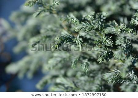 Vruchten vals blad groene bladeren Stockfoto © rbiedermann