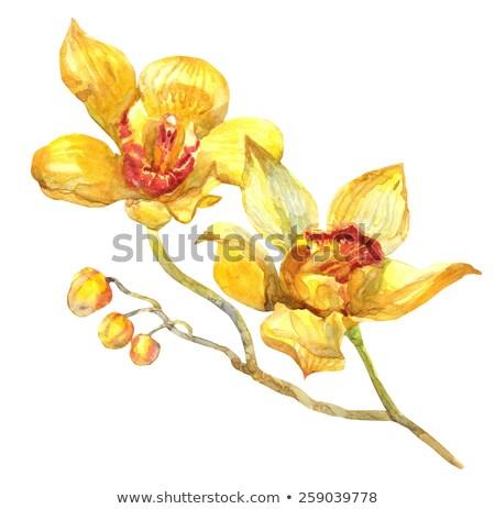 gelben · Blüten · Wasser · Blütenblätter · schwimmend · Blume · Haut - stock foto © marylooo