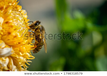 Flower Anther With Pollen Stock photo © manfredxy