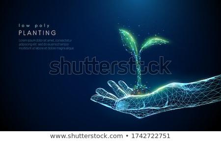 abstrato · verde · eco · planta · solo · flor - foto stock © pathakdesigner