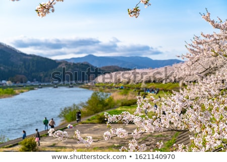 cherry blossom and blue sky in kakunodate stock photo © yoshiyayo