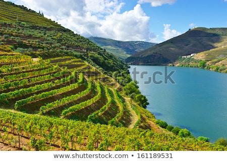 ősz szőlőskert Portugália felhők levél zöld Stock fotó © inaquim