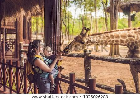 Mutlu hayvanat bahçesi manzara eğitim grup Afrika Stok fotoğraf © balasoiu