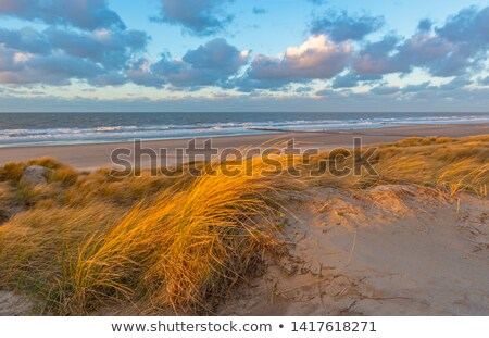 Oostende landscape Stock photo © ifeelstock