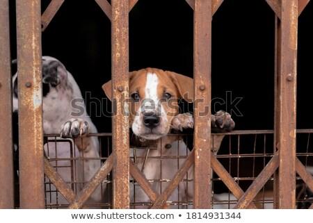 Szomorú kutya ül mögött vasaló kapu Stock fotó © anshar