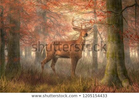 Buck in the woods - 3D render Stock photo © Elenarts