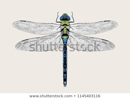 libélula · corpo · asas · grande · flores - foto stock © chris2766
