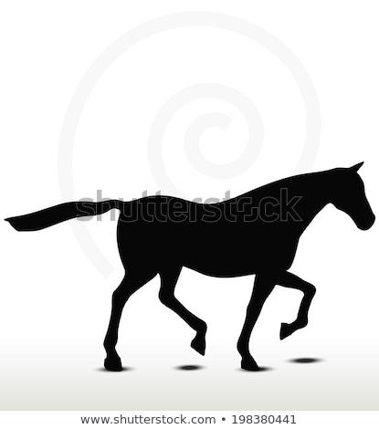 馬 · シルエット · 位置 · eps · 10 · ベクトル - ストックフォト © istanbul2009