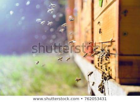 Méhkaptár fából készült citromsárga levelek tél erdő Stock fotó © feelphotoart